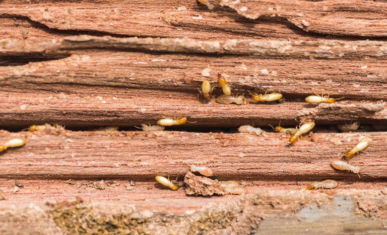 Termites can cause a lot of damage to your property. They silently attack the infrastructure of your house